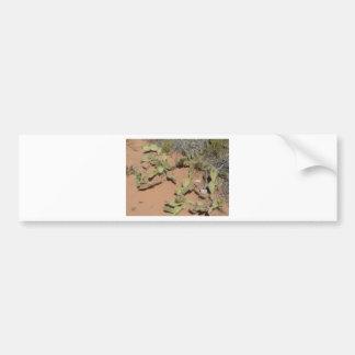 prickly pear cactus bumper sticker