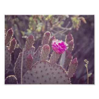 Prickly Pear Cactus Flower | Poster