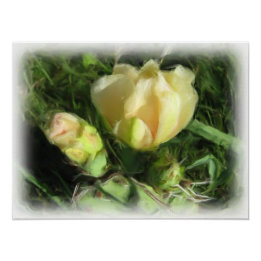 Prickly Pear Cactus Flower Poster