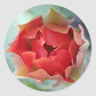 Prickly Pear Cactus Flower Round Sticker