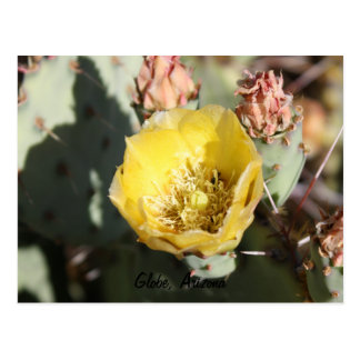 Prickly Pear Cactus,  Globe, Arizona Postcard