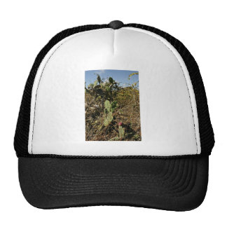 Prickly pear cactus hats