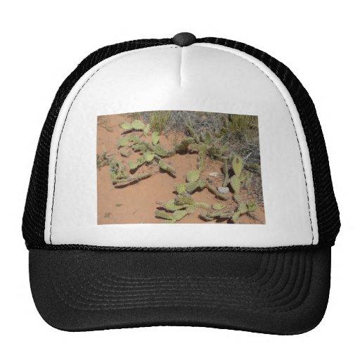 prickly pear cactus trucker hats
