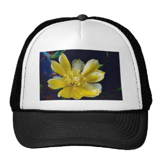 Prickly Pear Cactus Trucker Hats