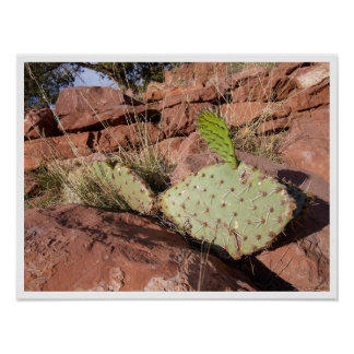 Prickly Pear Cactus in Red Sandstone, Arizona Poster