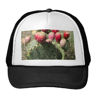 Prickly Pear Cactus In Texas Mesh Hats