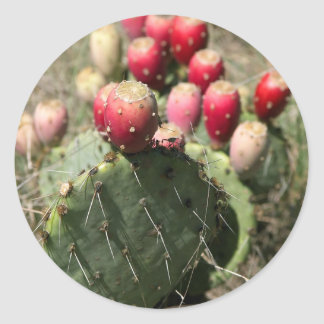 Prickly Pear Cactus In Texas Round Sticker