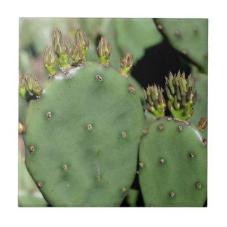 Prickly Pear Cactus Nature Ceramic Tiles