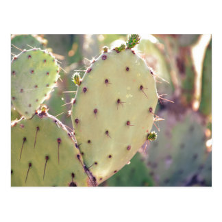 Prickly Pear Closeup | Postcard