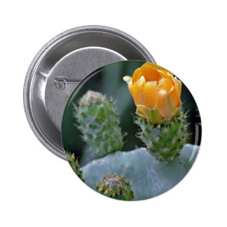 Prickly pear flower Paphos Cyprus flowers Pinback Button