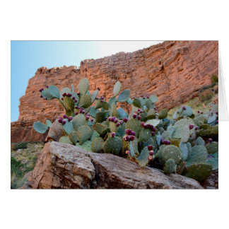 Prickly Pear in Grand Canyon Card