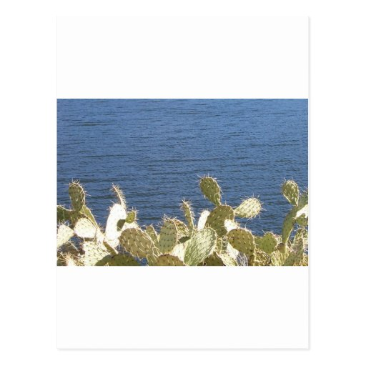 Prickly Pear on the Lake Postcard