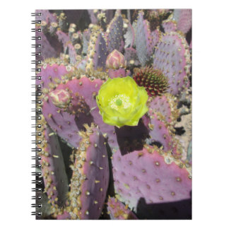 Prickly Pear Purple Yellow Spiral Note Books