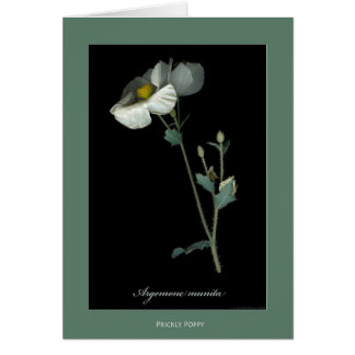 Prickly Poppy Botanical Print Cards