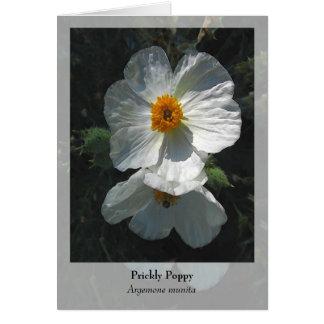 Prickly Poppy - Native Notecard