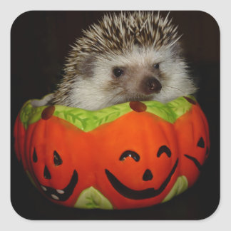 Prickly Pumpkin-Stickers Square Sticker