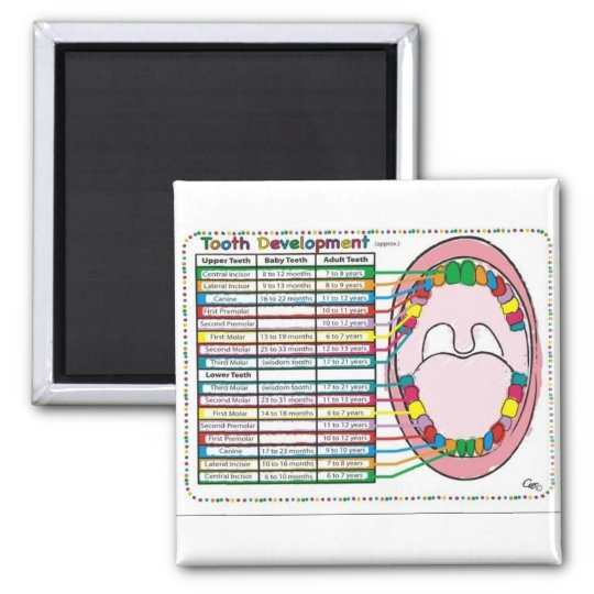Primary/Adult Tooth Eruption Timetable Magnet