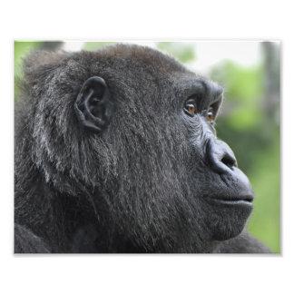 Primate Eyes Photographic Print