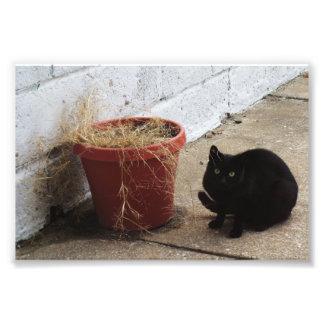 """Primitive City Cat 6"""" x 4"""" Print 02 Photograph"""