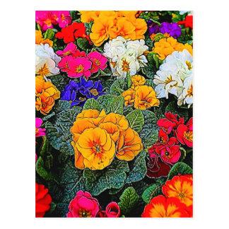 primrose in the garden postcard