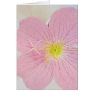 primrose pink card