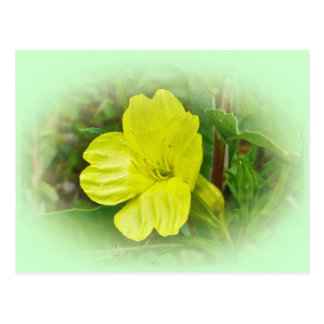 Primrose Yellow Wildflower Coordinating Items Postcard