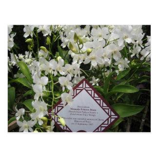 """Princess Diana"" Orchid Garden,Singapore Postcard"