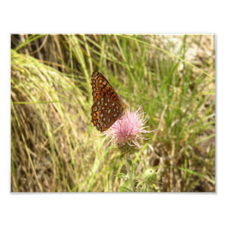 Print Art Photo Butterfly and Wildflower