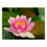PRINT, CANVAS GLOSS, PHOTOGRAPHY, LOTUS BLOSSOM