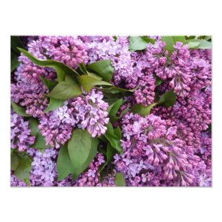 PRINT - Lilacs in Spring - France