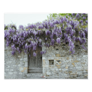 PRINT - Wisteria Viviers France Photo