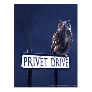 Privet Drive Postcard