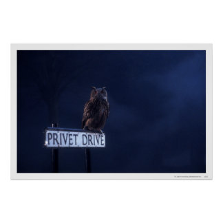 Privet Drive Poster