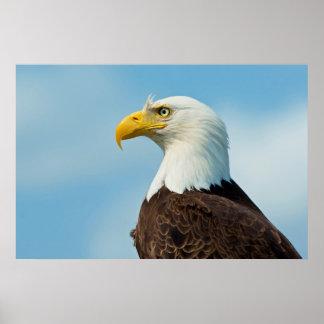 Profile Of A Bald Eagle Poster