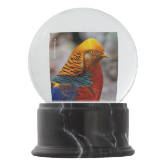 Profile of a Golden Red Pheasant Snow Globes