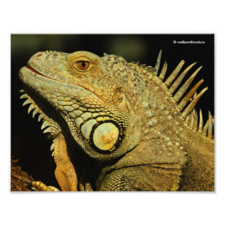 Profile of a Green Iguana Photo Print