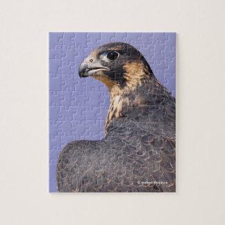 Profile of a Juvenile Peregrine Falcon Jigsaw Puzzle