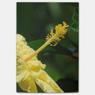 Profile of a Yellow Hibiscus Post-it Notes