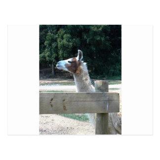 Profile of Llama Post Cards
