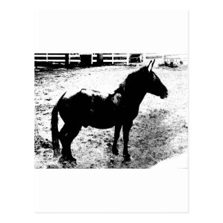 Profile of Mule in Black and White Postcard