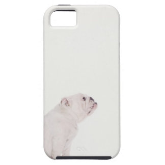 Profile of White Bulldog iPhone 5 Case