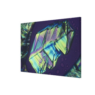 Progesterone crystals gallery wrapped canvas