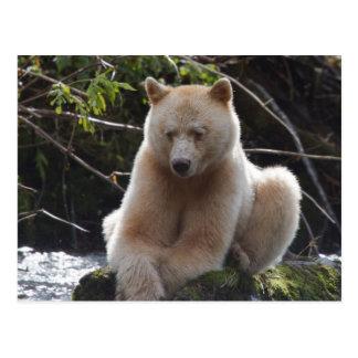 Project Spirit Bear Postcard