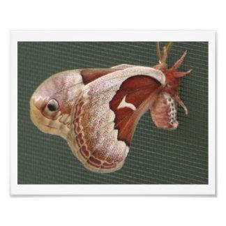 Promerthera Moth Art Photo