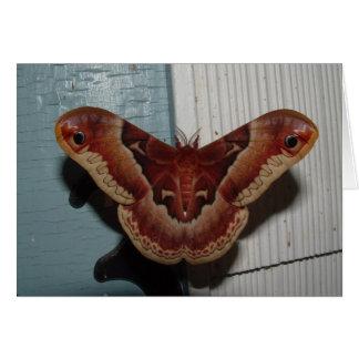 Promethea Moth Greeting Card