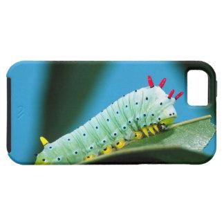 Prometheus Moth Caterpillar, Callosamia iPhone 5 Case