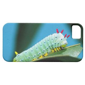 Prometheus Moth Caterpillar, Callosamia iPhone 5 Cover
