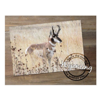 Pronghorn Antelope Photo on Wood - Wyoming WY USA Postcard