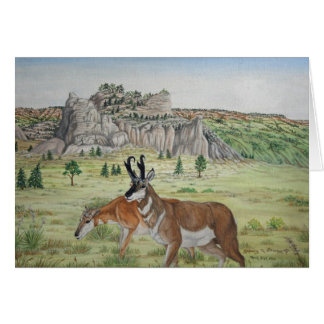 Pronghorn Antelope  Wildlife Art Card