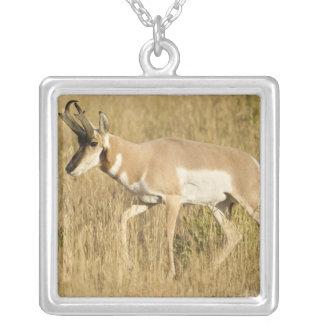 Pronghorn, Antilocapra americana, in a field Square Pendant Necklace